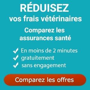 Comparez gratuitement les assurances pour chiens
