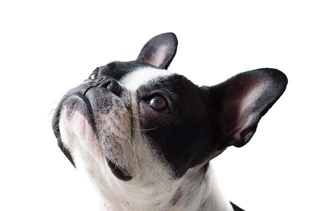 Calcul ration ménagère pour chien