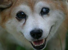 Comment aider un chien aveugle